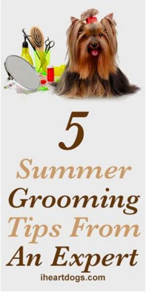 7 Tips On Grooming Your by Tips And Summer On
