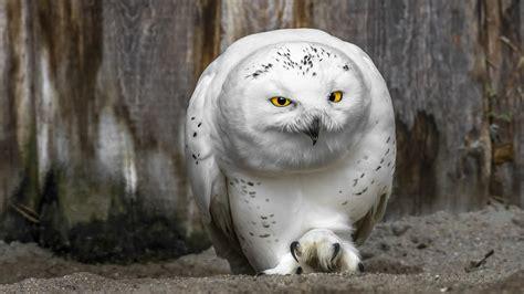 Tuscany House by White Owl 2048 X 1152 Animals Photography Miriadna Com