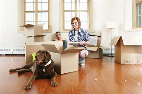 moving a dog to a new house 10 unexpectedly effective ideas to cheer up a depressed dog