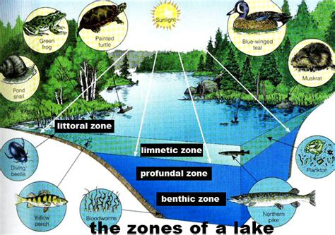the biology of lakes and ponds biology of habitats series books littoral zone