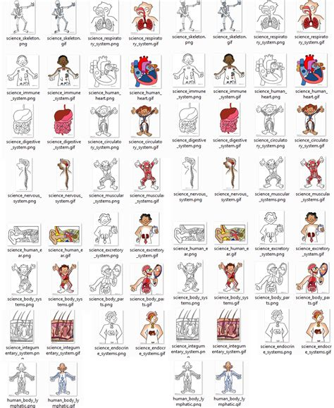 imagenes en ingles de las partes del cuerpo partes del cuerpo humano en ingles con imagenes imagui