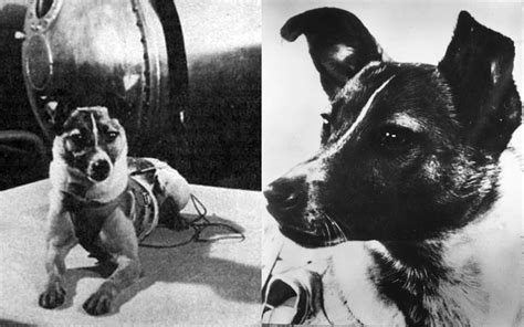 laika the space laika the a sacrifice to science on a one way mission to space 171 howl of a