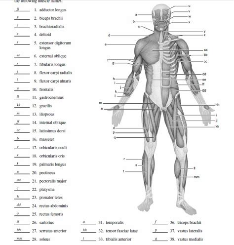 Muscular System Worksheet by Blank Fill In The Skeletal System Diagram Blank Free