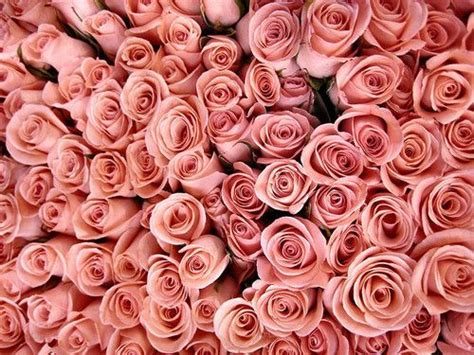 rose themes tumblr floral backgrounds for tumblr floral triangles
