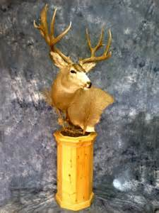 showpiece taxidermy south dakota deer mount taxidermist