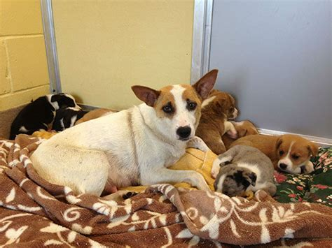 puppy rescue nj photos puppies relax after nj rescue 6abc
