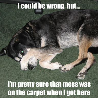 Carpet Cleaning Meme - friday funnies memes for carpet cleaners servicemonster