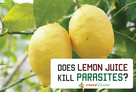 Lemon Juice Detox Diarrhea by Parasite Cleanse How To Do It The Right Way