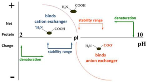 protein zwitterion ion exchange chromatography lsr bio rad