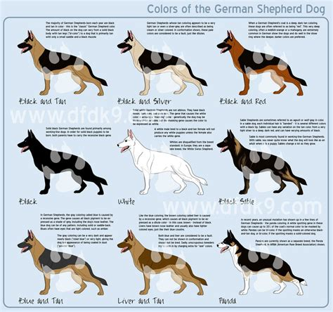 german shepherd colors german shepherd colors by mausergirl on deviantart