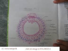 histology slides database histological diagram of