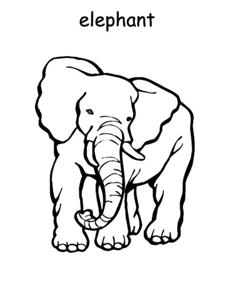 e is for elephant coloring page african animal colouring
