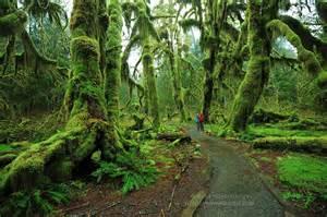 Tropical Plants Ireland - olympic national park wa usa geo 121 wiki spring 2012