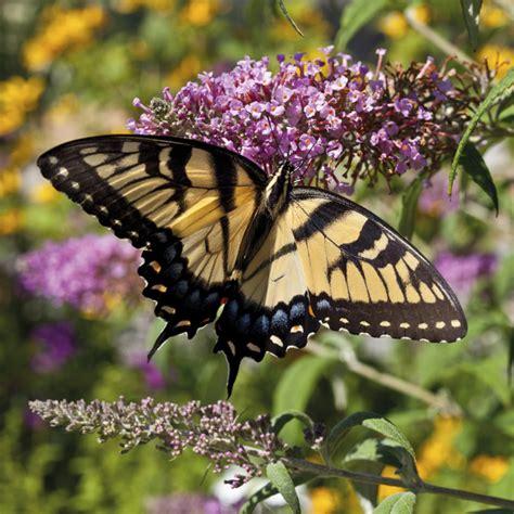 il giardino delle farfalle il giardino delle farfalle il germoglio