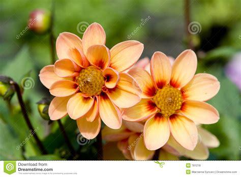 fresh flowers royalty free stock photos image 781218