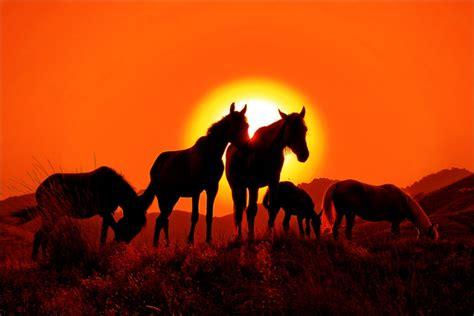 beleza da natureza fotos e imagens as melhores imagens da natureza beleza e natureza