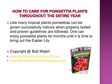 how to care for poinsettia plants throughout the entire year