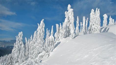 frozen winter wallpaper snowy statues guarding the frozen winter nature wallpaper