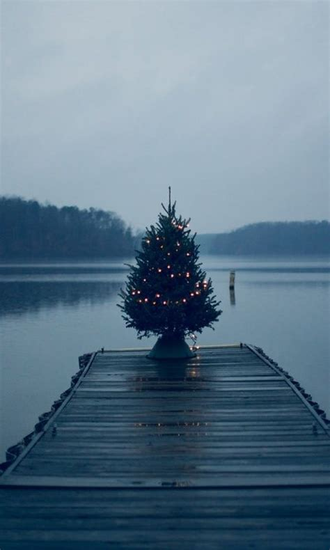 ponzi christmas trees marin 10 best images about cheer on trees the boat and home