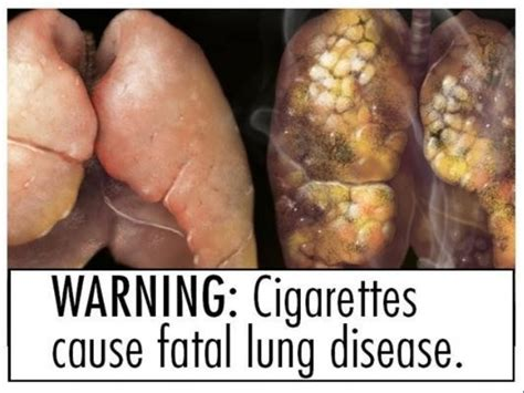 Marijuana Plant Diseases Pictures - the effects of smoking and illegal drugs on health