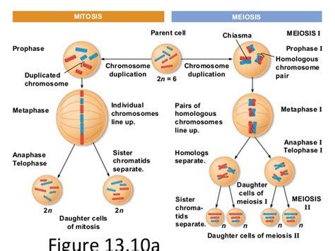 2n 6 meiosis diagram chapter 13 meiosis