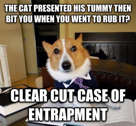Lawyer Cat Meme - livememe com lawyer dog