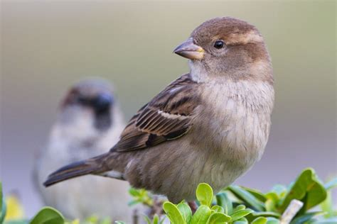 Essay On The Bird Sparrow by Discouraging And Controlling House Sparrows