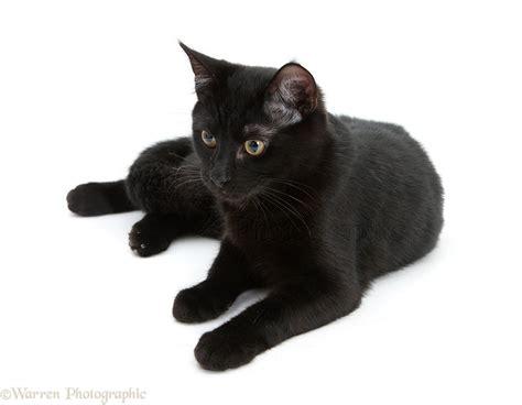 Black Cat black cat photo wp20716