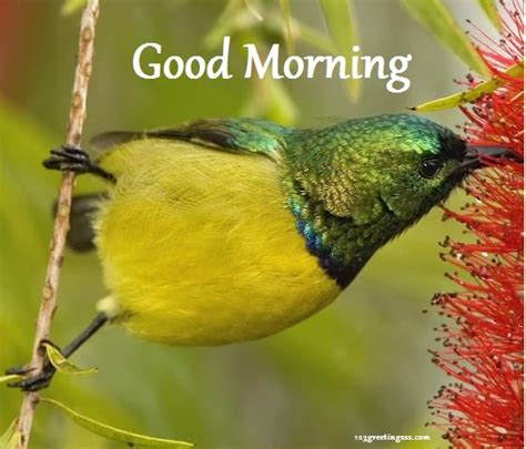 good morning wishes with birds pictures images page 2
