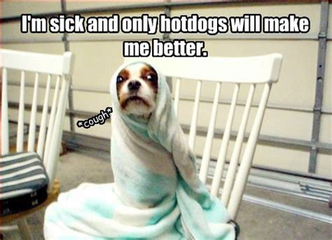 Sick Puppy Meme - sick dog funny pictures quotes memes jokes