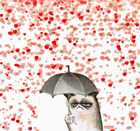 valentines grumpy cat happy s day the books are taking