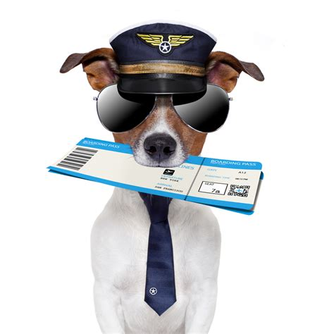 dogs on planes the trainer how to fly with a trainer and tips