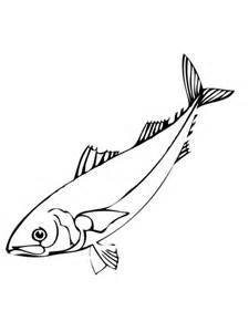 herring fish coloring page herring fish coloring page supercoloring com