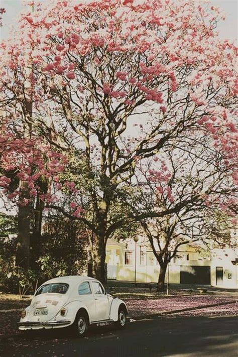 cherry tree used cars vintage flower