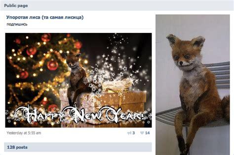 Stoned Fox Meme - stoned fox упоротая лиса know your meme