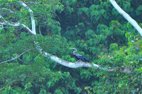 film ular di kalimantan hutan lesan akan menjadi kawasan lindung di kabupaten