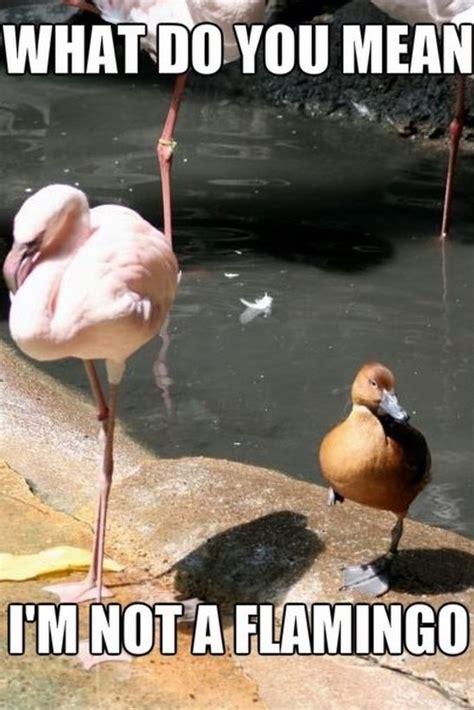 Funny Pics Memes - funny pics flamingos meme