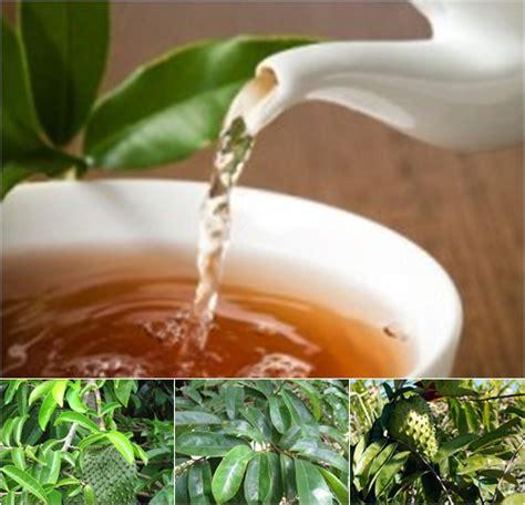 tips membuat teh daun sirsak