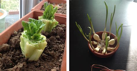 7 vegetables you can regrow 10 vegetables you can buy once and regrow forever