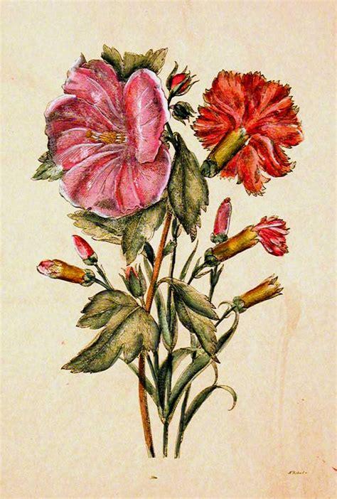 botanica fiori fiori e botanica florence prints le ste di firenze
