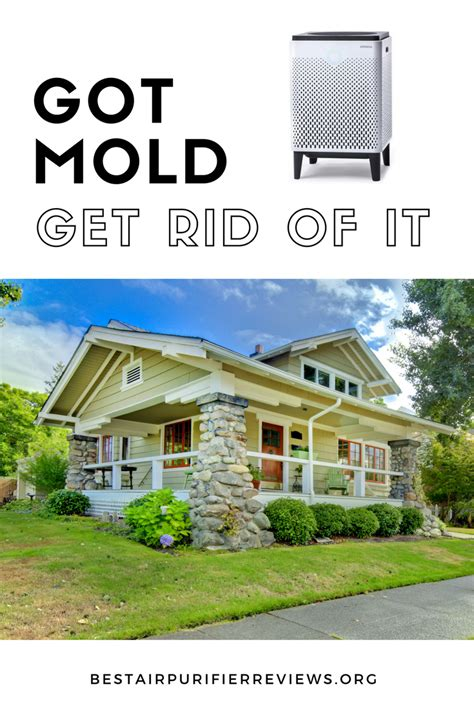 how to get rid of mold in house how to get rid of mold in house can you remove mold without a certified mold removal