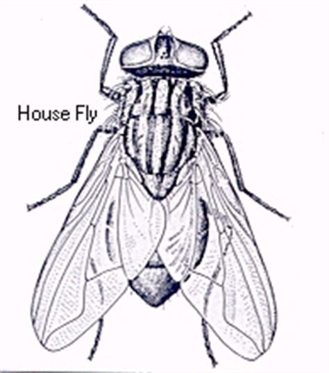 kill house flies house fly elimination kill house flies fly traps sprays