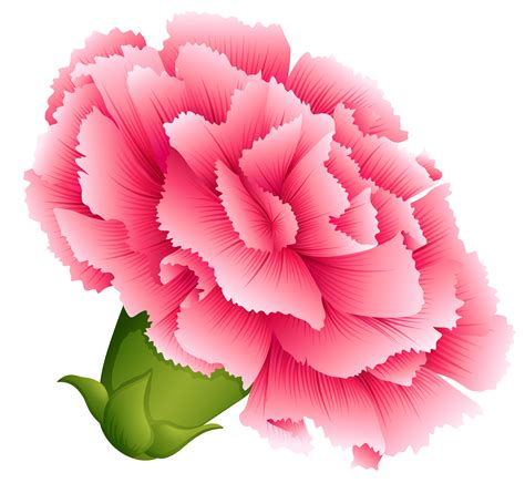 carnation clipart free download clip art free clip art