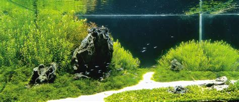 aquascaping tout sur la pratique aquagenome