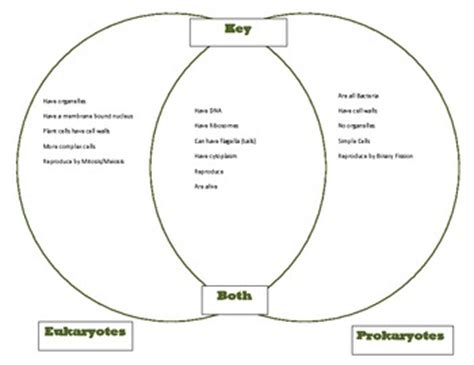 prokaryote and eukaryote venn diagram venn diagram key comparing prokaryotes and by nancie