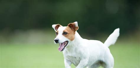 alimento per cani alimento renal eukanuba