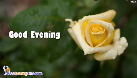 Evening Roses Images
