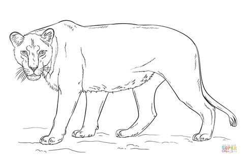 coloring pages animals realistic lion lioness coloring page free printable coloring pages
