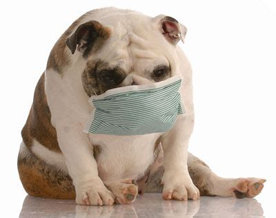 why do dogs cough what to do if your is coughing blood new health advisor