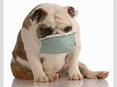 What to Do If Your Dog Is Coughing Blood?   New Health Advisor Liver Failure In Dogs Causes For